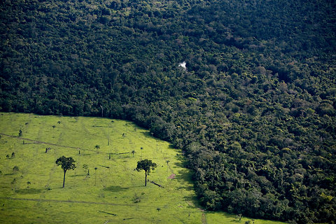 Brazil's New Leader Mulls Country's Forest Protections