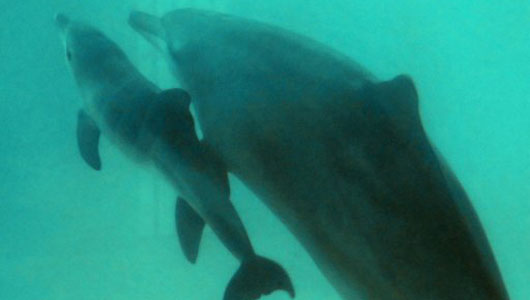 South Korea to ban catching of dolphins for shows