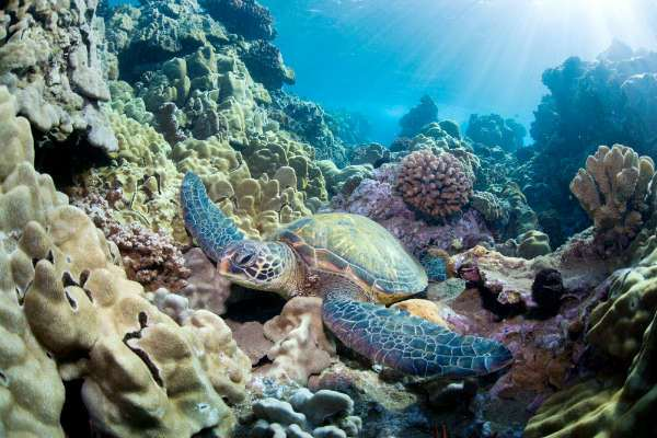 Scientists Find That Climate Change Stalls Reef Growth