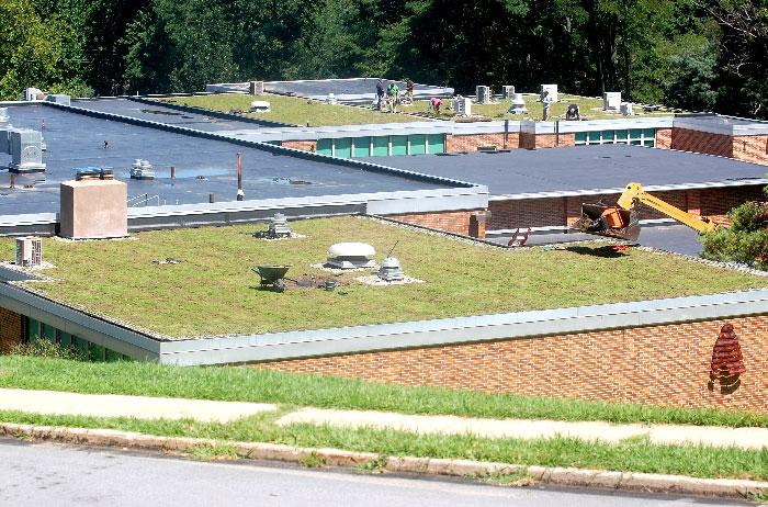 Mandate New Public Schools Come with Green Roofing