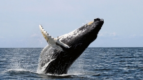 The New Whaling