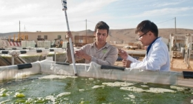 Algae Fuel Advancing in Practicality