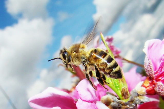 Bee Deviled: over cause of Colony Collapse Disorder