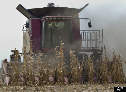 Crop Loss Smaller Than Feared, USDA Reports