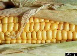 GMO Debate Heats Up