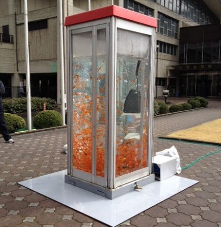 Old phone booths get new life as giant public fish tanks
