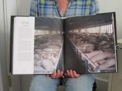 Going undercover in the American factory farm