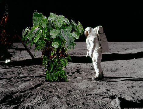 Don't worry, when we move off of Earth we can grow plants in space