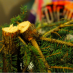 Here's how to restore a community with your old Christmas tree
