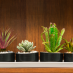 Not All Greenery Is Good: 10 Hazardous Houseplants